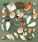 Mixed Lot of Semi-Precious Stones